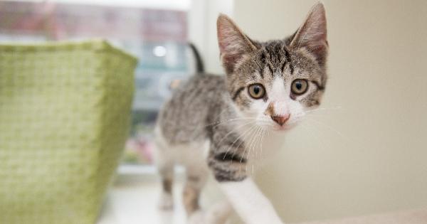 AdopteTonChat, le site pour adopter un chat : décryptage